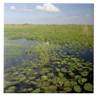 Lirios de agua y sawgrass en los marismas 2 de la  azulejo