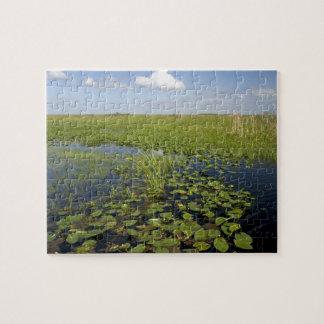 Lirios de agua y sawgrass en los marismas 2 de la  puzzles