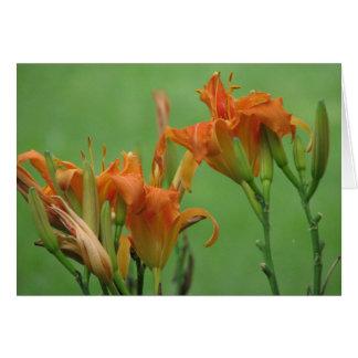 Lirios de día anaranjados tarjeton