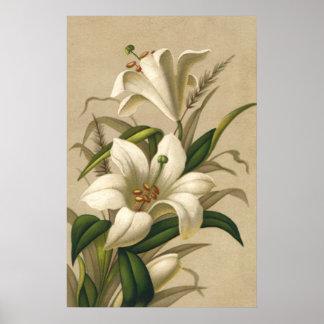 Lirios de pascua del vintage, flores del Victorian Póster