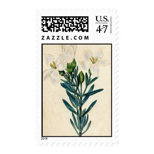 Lirios de pascua del vintage sellos postales