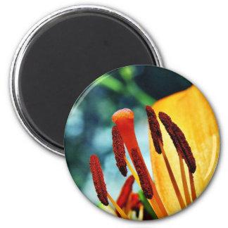 Lirios del lirio de día de las flores imán