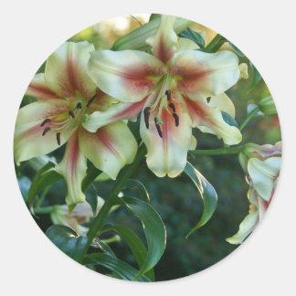 Lirios en el jardín botánico de Missouri Pegatina Redonda