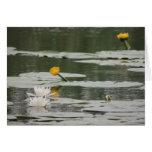 Lirios que flotan en el río tarjetas