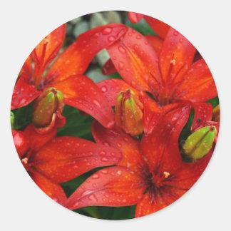 Lirios rojos hermosos del aztek después de la pegatina redonda