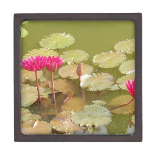 Lirios rosados del loto caja de regalo de calidad