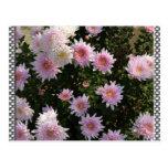 Lirios rosados postal
