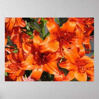 Lirios tigrados anaranjados vibrantes póster
