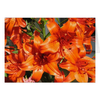 Lirios tigrados anaranjados vibrantes felicitaciones