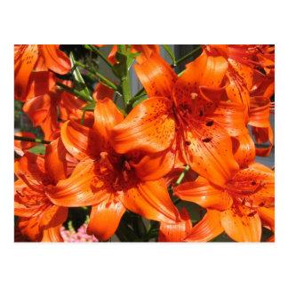 Lirios tigrados anaranjados vibrantes postal