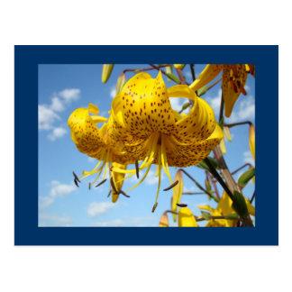 Lirios tigrados del amarillo del verano de las pos tarjetas postales