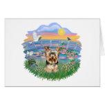 Lirios Yorkshire Terrier (#17) de la salida del so Tarjeton