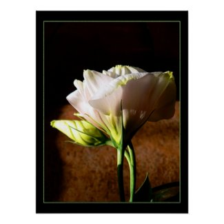 Lisianthus Blossom print