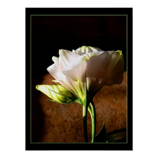 Lisianthus Blossom Posters