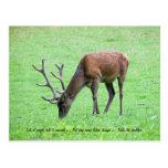 Listen to Nature Postcard