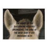 Listening Horse Ears Postcard