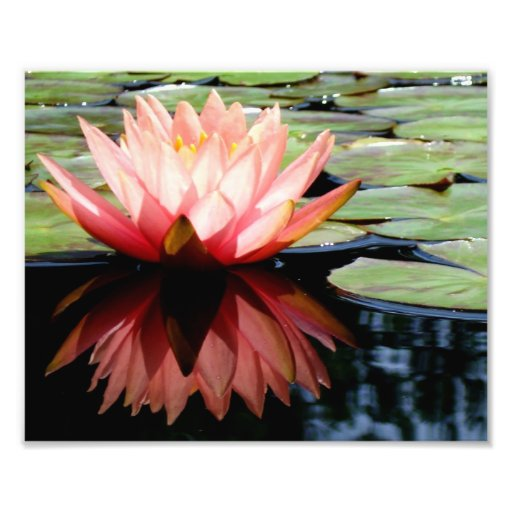Lit 8x10 dentro de Lotus Arte Fotografico