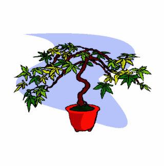 Literati Maple Bonsai Graphic Image Photo Cutouts