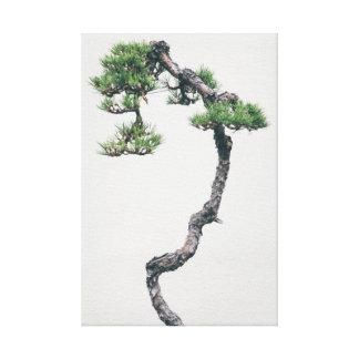 Literati Pine Bonsai Canvas Print