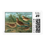 Litho antiguo, alondra eurasiática, alondra sellos
