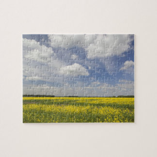 Lithuania, Central Lithuania, Joniskis, field of Jigsaw Puzzle