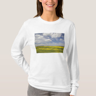 Lithuania, Central Lithuania, Joniskis, field of T-Shirt
