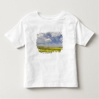 Lithuania, Central Lithuania, Joniskis, field of Tee Shirt