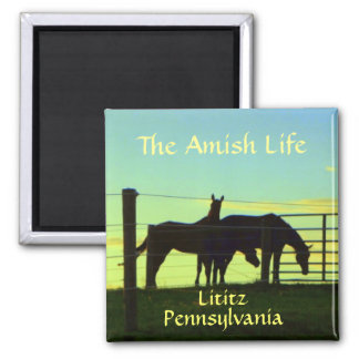 Lititz Magnet! Amish Horses at Sunset 2 Inch Square Magnet