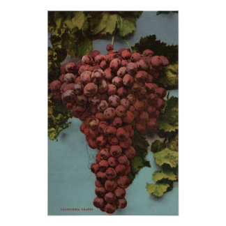 Litografía de Chromo de la fruta de las uvas de Ca Póster