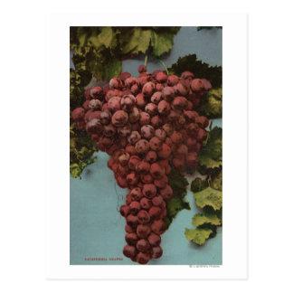 Litografía de Chromo de la fruta de las uvas de Tarjeta Postal