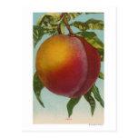 Litografía de Chromo de la fruta de PeachFruitStat Tarjeta Postal