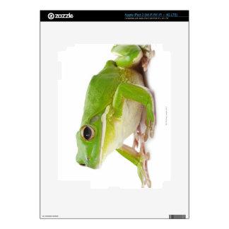 Litora Infrafrenata, Frog Decals For iPad 3