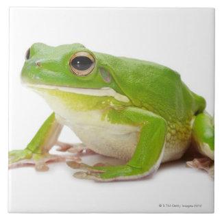 Litora Infrafrenata, Frog Ceramic Tile