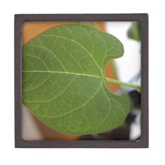 Littel Leafy Premium Gift Boxes