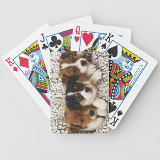 Litter of puppies bicycle playing cards