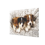 Litter of puppies canvas prints
