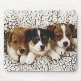 Litter of puppies mouse pad