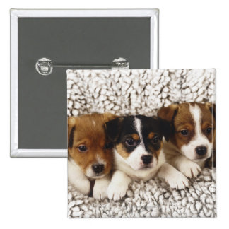 Litter of puppies pinback button