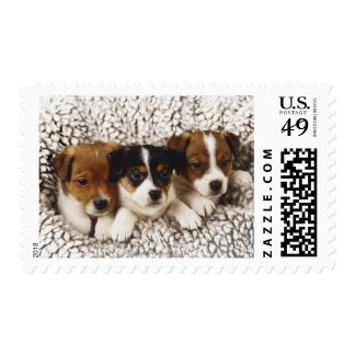 Litter of puppies postage