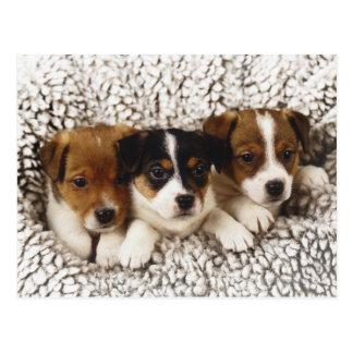 Litter of puppies postcard