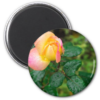 Little autumn rose with blur magnet