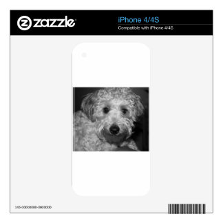 Little Awesome Abby the Yorkie Poo 2 Skins For iPhone 4