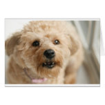 Little Awesome Abby the Yorkie Poo Card