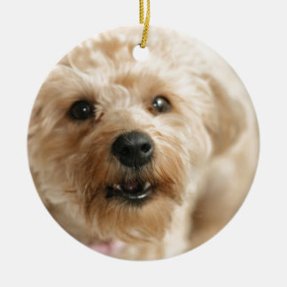 Little Awesome Abby the Yorkie Poo Ceramic Ornament