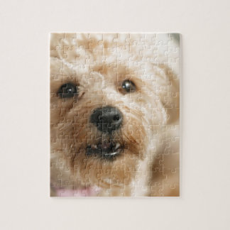 Little Awesome Abby the Yorkie Poo Jigsaw Puzzle