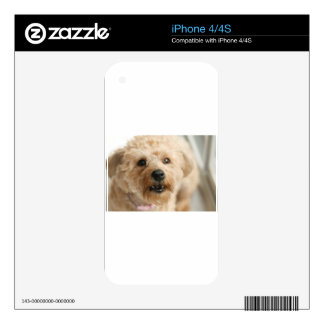 Little Awesome Abby the Yorkie Poo iPhone 4 Decal
