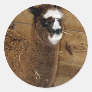 Little Baby Alpaca - Vicugna pacos Classic Round Sticker