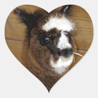 Little Baby Alpaca - Vicugna pacos Heart Sticker