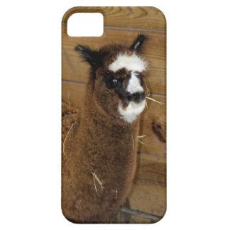 Little Baby Alpaca - Vicugna pacos iPhone SE/5/5s Case
