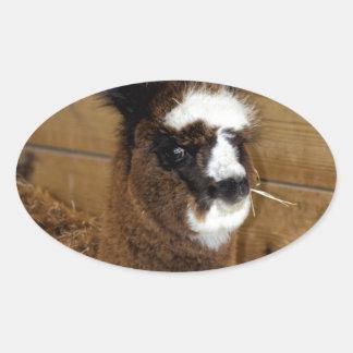 Little Baby Alpaca - Vicugna pacos Oval Sticker